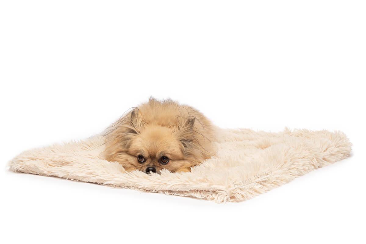 dog lying on blanket
