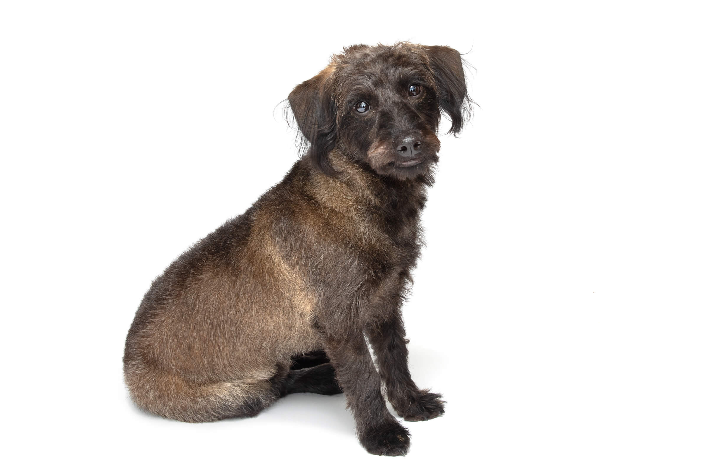 brown dog in commercial photography shoot