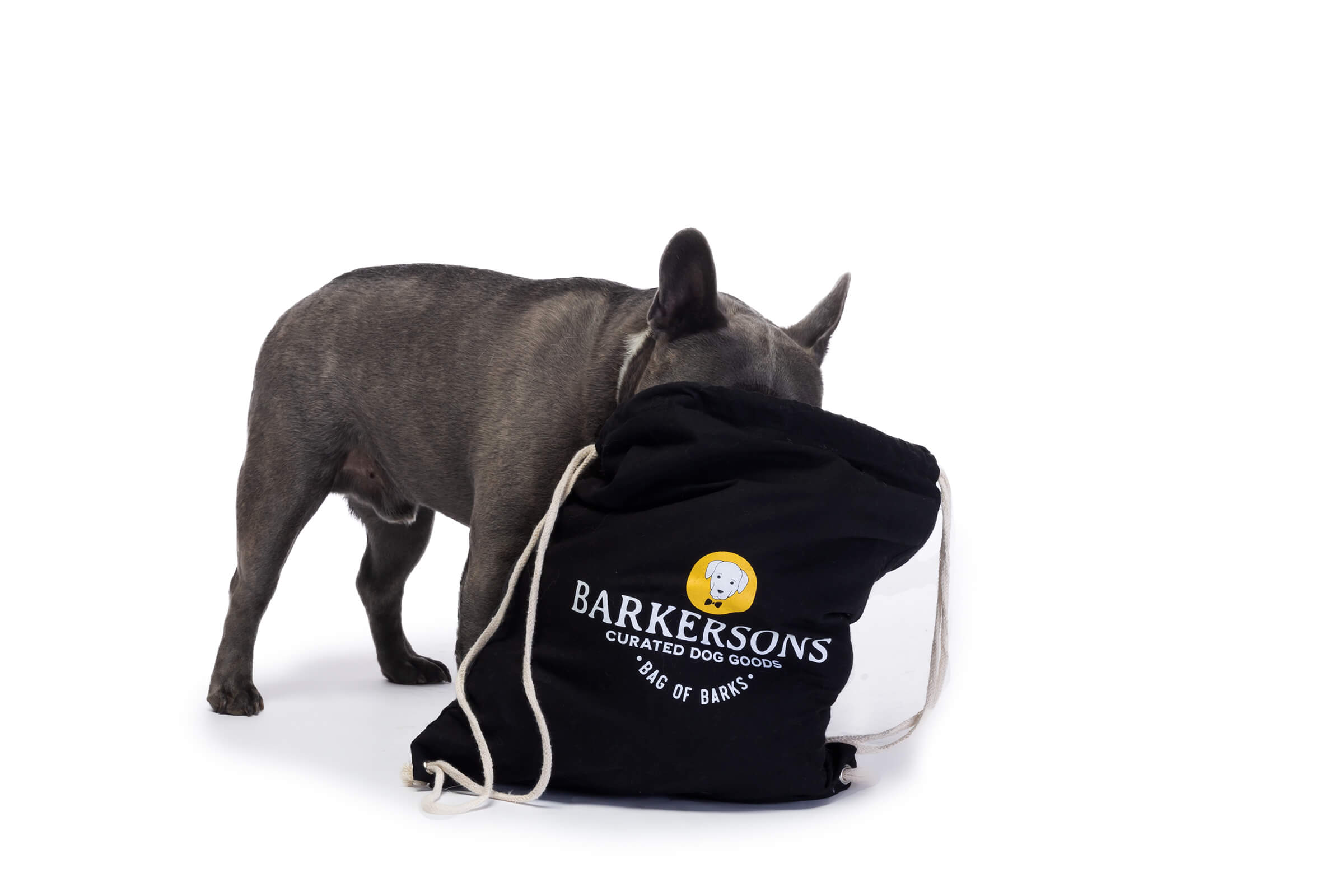 french bulldog looking for treats in monthly subscription bag