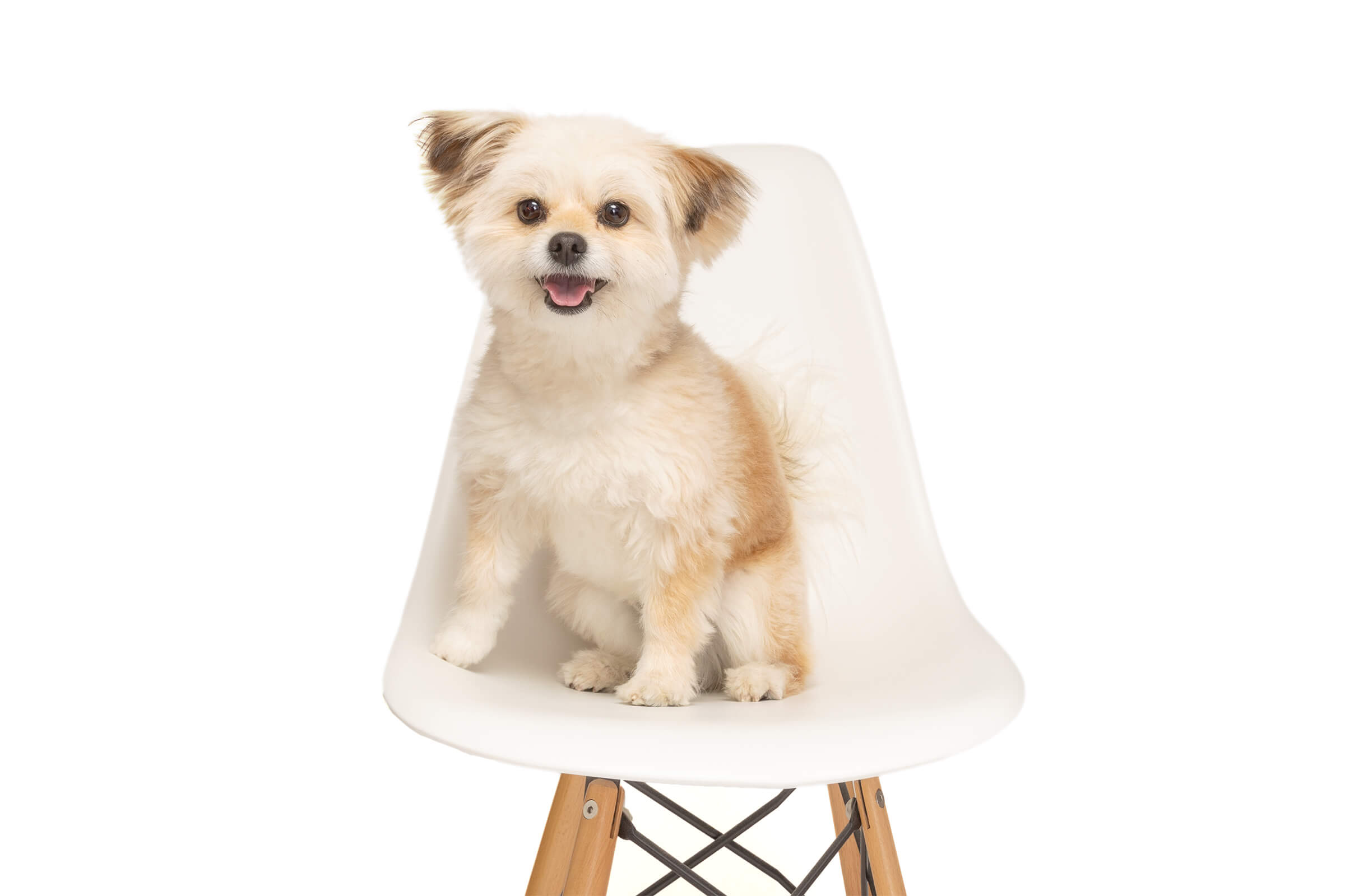 smiling dog on ikea chair during commercial pet shoot