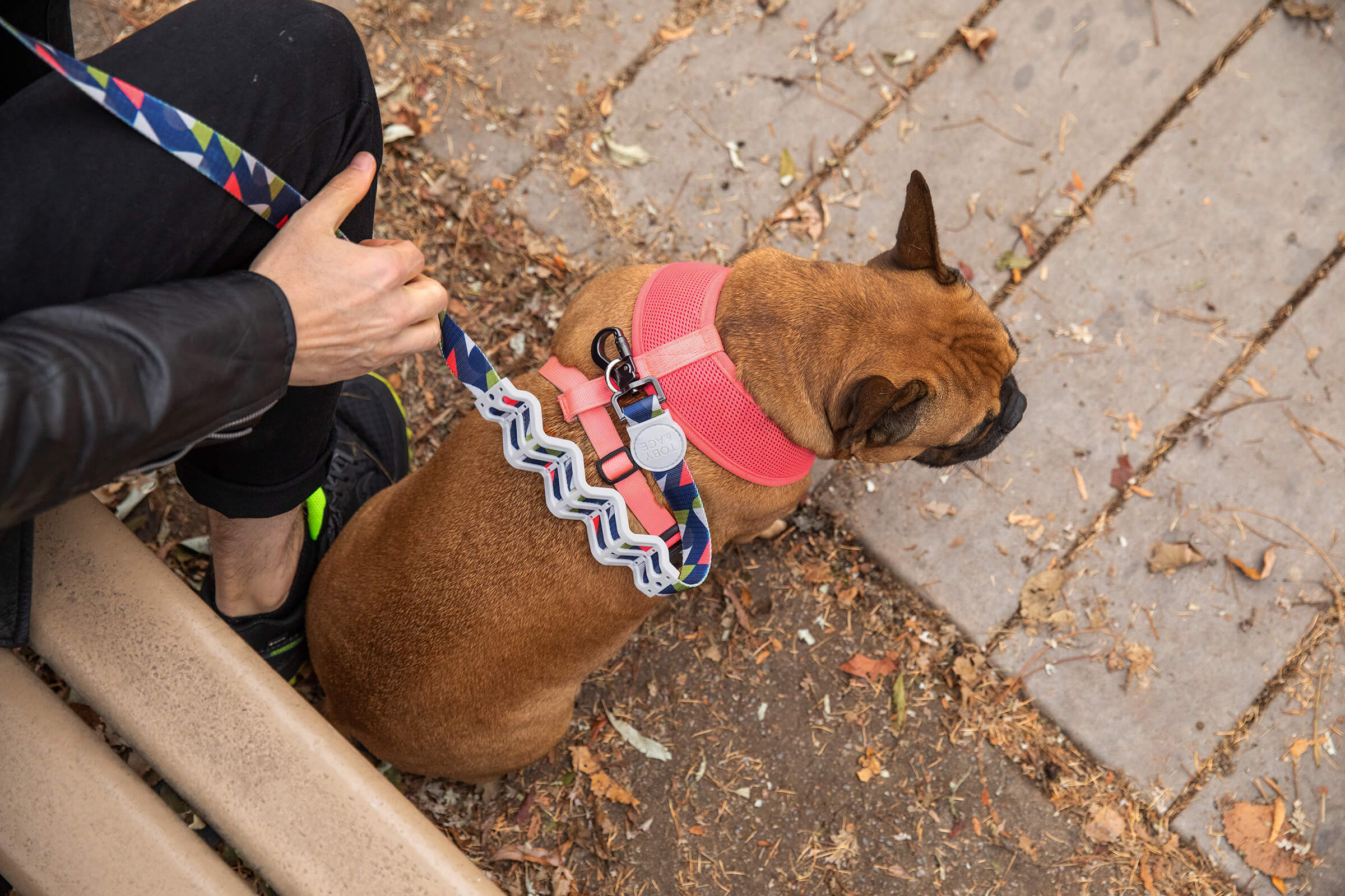 frenchie with dog leash in commercial