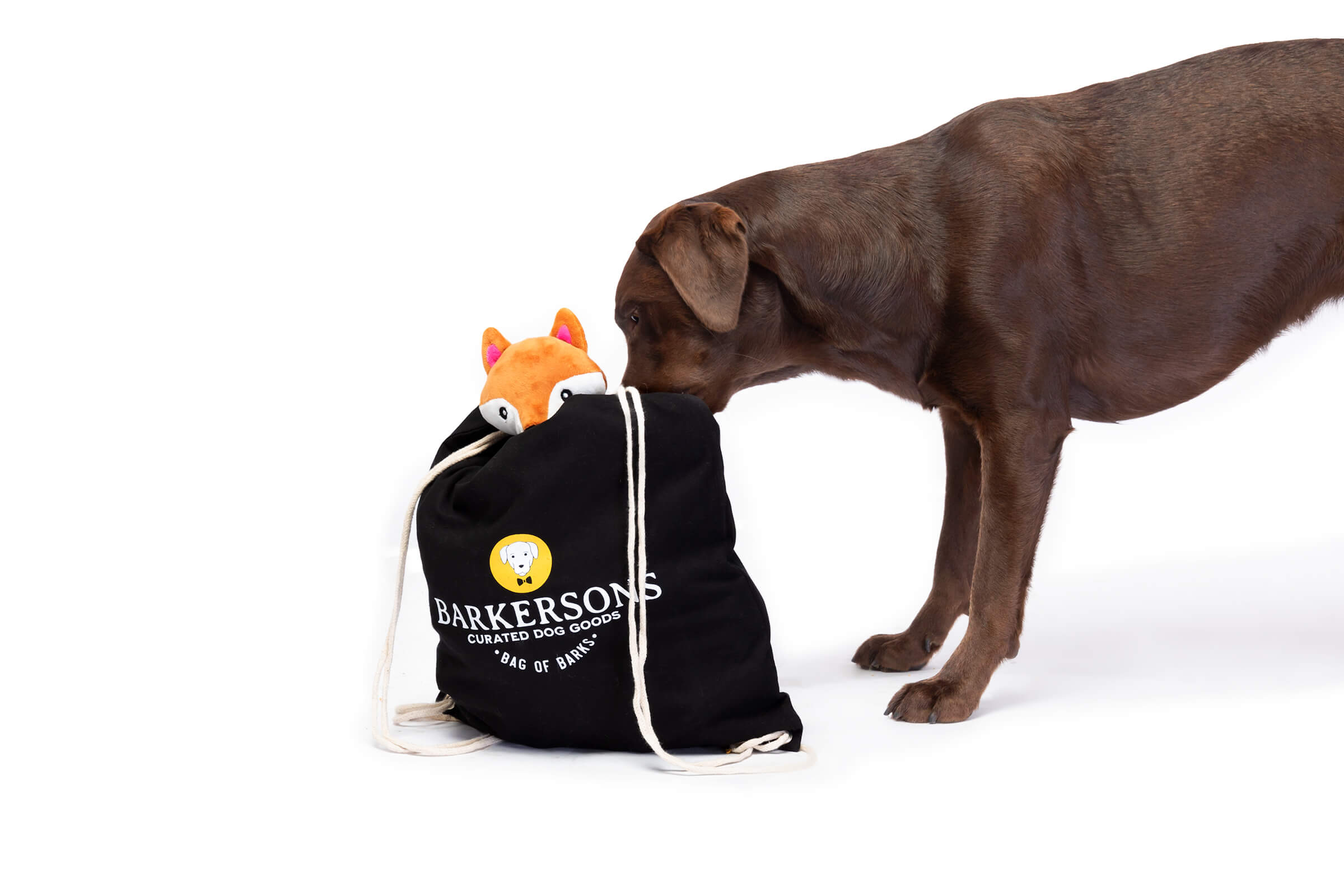 brown lab poking nose in dog subscription toy bag