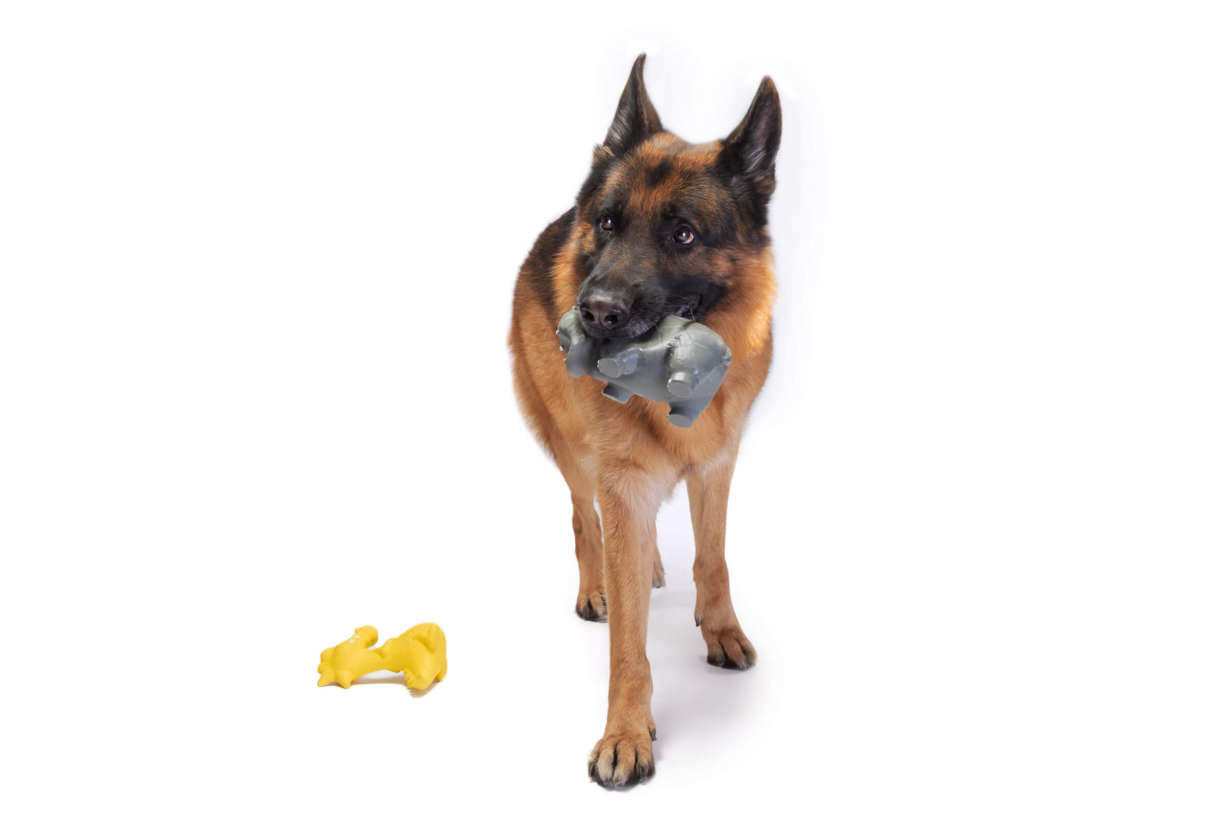 german shepherd with dog toy in his mouth on commercial shoot