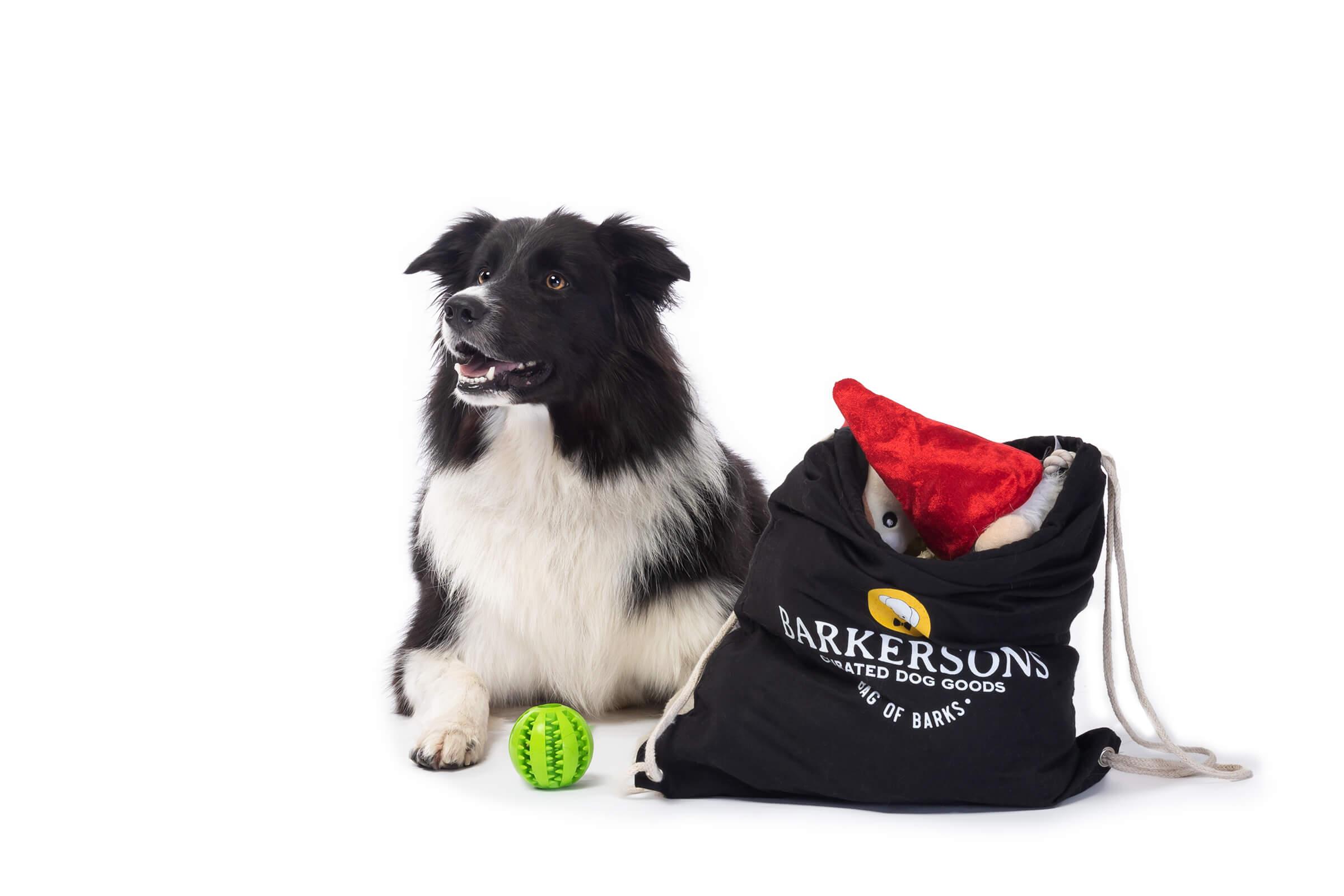 australian shepherd on commecial dog shoot for subscription box